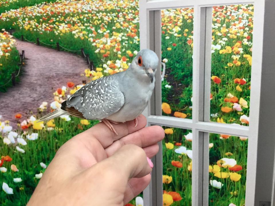 Bird Vet Care at Little Critters Veterinary Hospital Gilbert, AZ