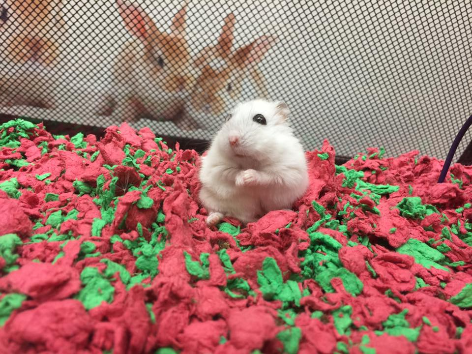 Rodent Vet Care at Little Critters Veterinary Hospital Gilbert, AZ