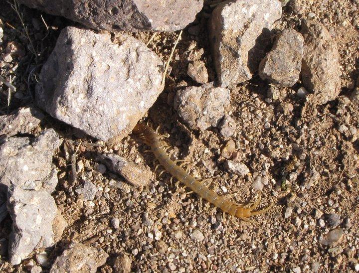 Venomous Dangers to Pets in AZ