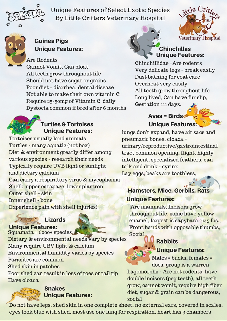Unique Features of Exotic Pets