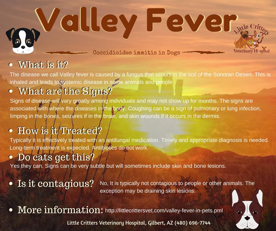 Valley Fever in Dogs