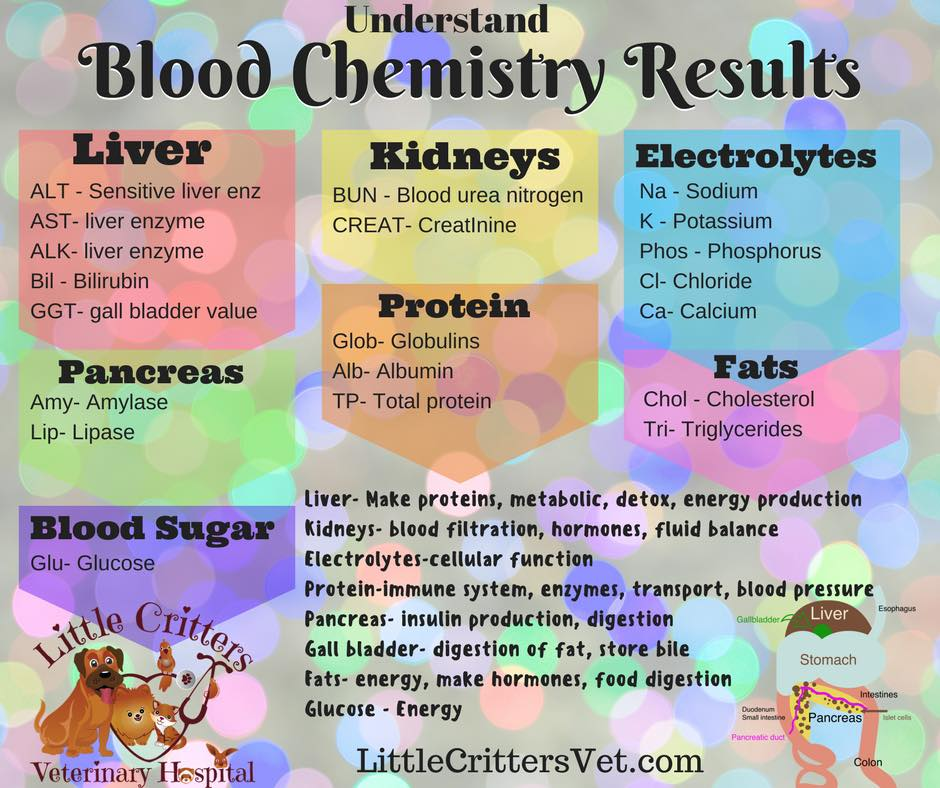 Understand your pet's blood results