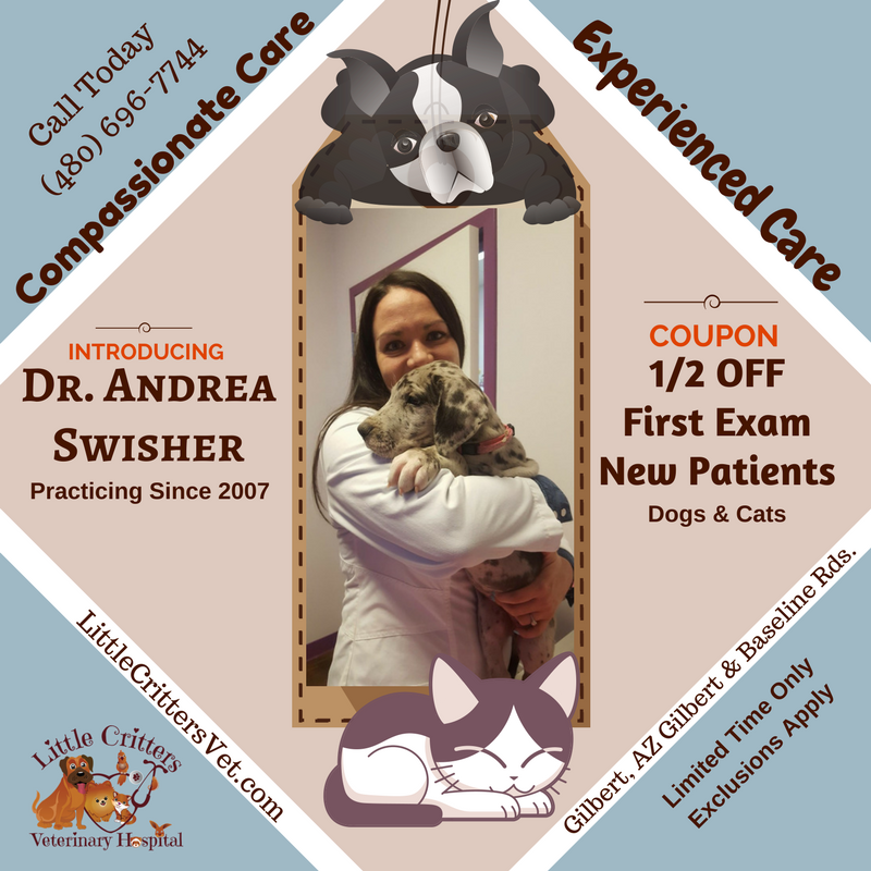 Dr. Andrea Swisher at Little Critters Veterinary Hospital - Coupon