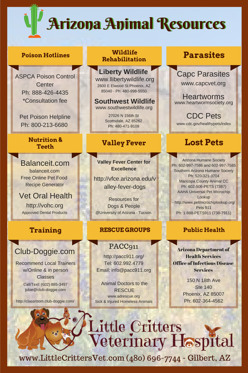 Pet Owner Resources from Little Critters Vet