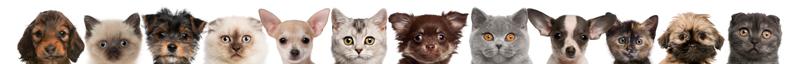 Little Critters vet