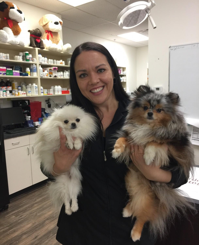 dog care at little critters vet