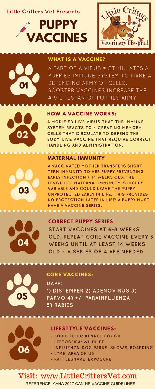 vaccinating puppies - little critters veterinary hospital - gilbert, az