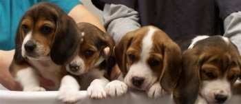 Spay and neuter puppies