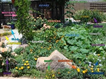 tortoise veggie garden