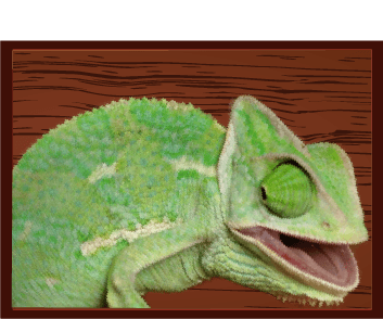Reptile Veterinary Care at Little Critters Veterinary Hospital in Gilbert, AZ