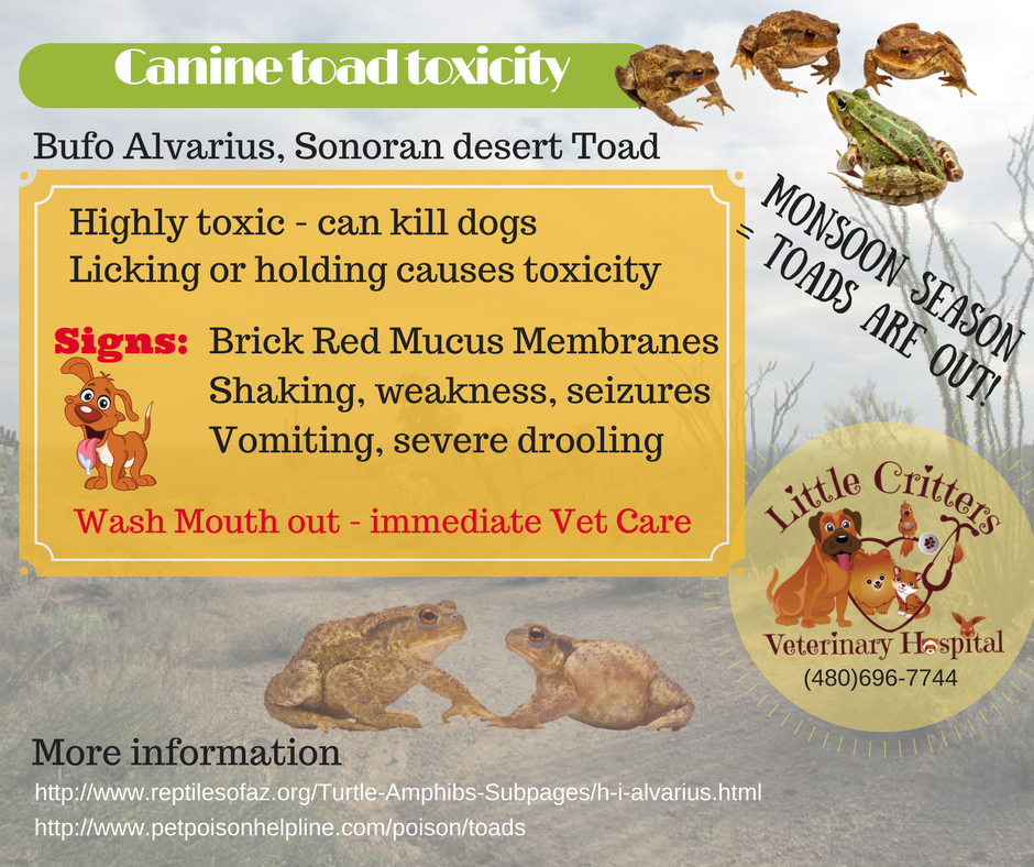 Venomous Dangers to Pets in AZ
